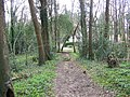 Bridleway, Radnall Wood - geograph.org.uk - 740129.jpg