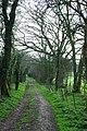 Bridleway towards Soberton Down - geograph.org.uk - 379194.jpg