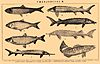 Brockhaus and Efron Encyclopedic Dictionary b53 432-2.jpg