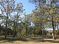 Browns Plains acacia park 3.jpg
