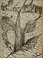 Bulletin Societe D'Histoire Naturelle de Toulouse (et de Midi Pyrenees). (1885) (20313784500).jpg