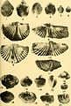 Bulletins of American paleontology (1953-1955) (20314904980).jpg