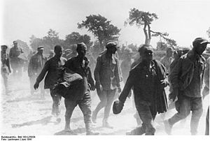 German mistreatment of Soviet prisoners of war - Red Army soldiers, captured between Lutsk and Volodymyr-Volynskyi. June 1941