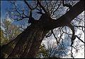 Burghley House Park landscape april 2017 37.jpg