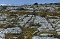 Burren-10-Felsboden-Gruppe-1989-gje.jpg