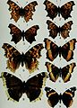 Butterflies and moths of Newfoundland and Labrador - the macrolepidoptera (1980) (20322996918).jpg