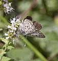 Butterfly 1 (3837316459).jpg