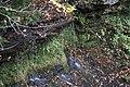 Buttermilk Falls - panoramio (18).jpg