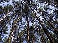 Bydgoszcz - las parkowy - panoramio.jpg