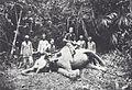 COLLECTIE TROPENMUSEUM Europese en Indonesische mannen poseren in het bos bij een tijdens de jacht geschoten olifant TMnr 60042075.jpg