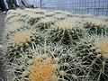 Cactus nursery.jpg