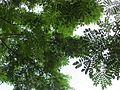 Canopy (7374361234).jpg
