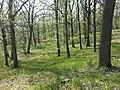 Carex praecox sl29.jpg