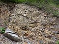 Carpathian flysch cm03.jpg