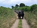 Carriage driving near Badbury Rings - geograph.org.uk - 884622.jpg