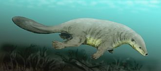 Evolution of mammals - Reconstruction of Castorocauda. Note the fur and the adaptations for swimming (broad, flat tail; webbed feet) and for digging (robust limbs and claws).