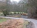Cattle, Millhaugh - geograph.org.uk - 353876.jpg