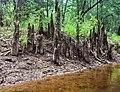 Cedar Creek (3f9e0e17-49d0-4539-9e1f-f2f57b9fc5de).jpg