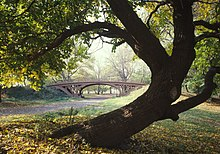 An ornamental bridge with a large crooked-trunked tree in the foreground