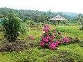 Chellarkovil Garden - panoramio (2).jpg