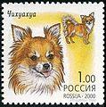 Chihuahua-Canis-lupus-familiarisRussia, 2000.jpg