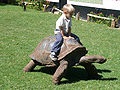 Child riding tortoise.jpg