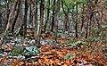 Chiricahua Woods - panoramio.jpg