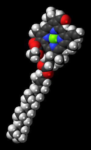 Chlorophyll b - Image: Chlorophyll b 3D spacefill
