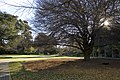 Christchurch - panoramio - Maksym Kozlenko (18).jpg