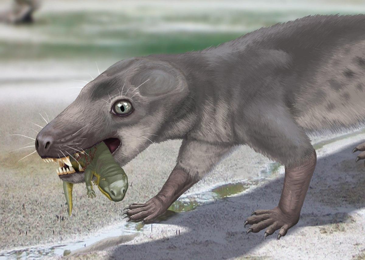 Px Chthonosaurus Velocidens