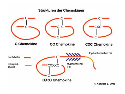 Strukturen der Chemokinen