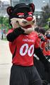 Cincinnati Bearcat.png