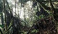 Cloudforest on the summit plateau of Waukauyengtipu.jpg