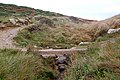 Coastpath footbridge over stream above Porthmelgan cove - geograph.org.uk - 1529709.jpg