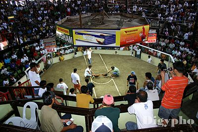 Sabong or Cock Derby in Davao City. - Philippines