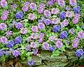 Collage purple flowers.JPG