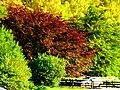 Colours - panoramio (1).jpg