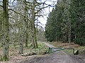 Coniferous to the right, deciduous to the left - geograph.org.uk - 760293.jpg
