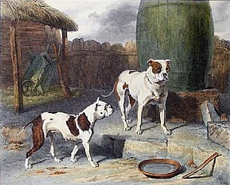 Old English Bulldog - Crib and Rosa