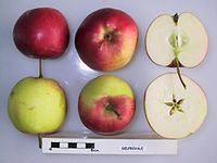 Cross section of Delprivale, National Fruit Collection (acc. 1998-016).jpg