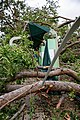 Cyclone Marcus in Darwin – Damaged structure by fallen tree 03.jpg