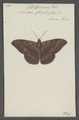 Cyligramma - Print - Iconographia Zoologica - Special Collections University of Amsterdam - UBAINV0274 060 16 0084.tif
