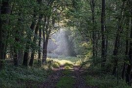 Dülmen, Naturschutzgebiet -Am Enteborn- -- 2014 -- 0213.jpg