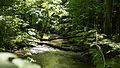 D08 Tiefental Königsbrück Naturschutzgebiet (13).jpg