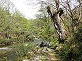 DSC06258 Fraga da Marronda, Alto Eo, Lugo, Galicia.jpg