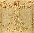 Da Vinci Vitruve Luc Viatour cropped.jpg