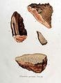 Daedalea quercina — Flora Batava — Volume v10.jpg