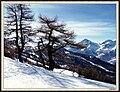 Dal monte Genevris - panoramio.jpg