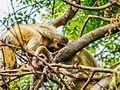 Daulatabad, Aurangabad - panoramio (35).jpg