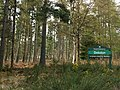 Debdon Forest - geograph.org.uk - 787234.jpg